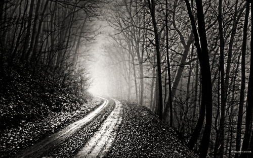 trees_forest_path_fog_mist_grayscale_roads_monochrome_desktop_1680x1050_hd-wallpaper-569001