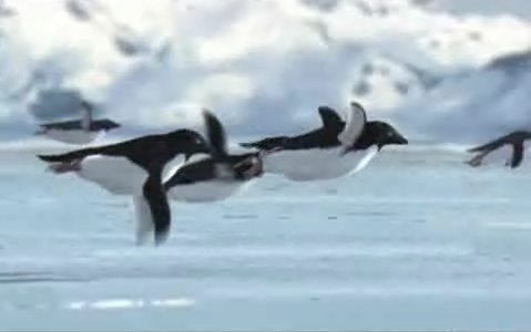penguin_flight